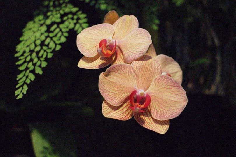 Orchids 2015-08-06 20.12.33