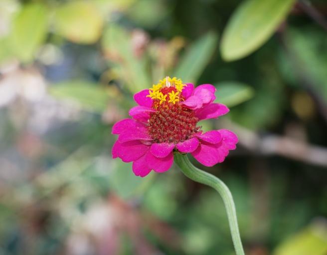 Pink flower 2015-09-06 16.04.10