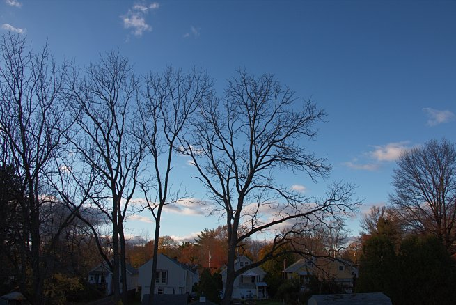 Veterans' Day Afternoon in Abington