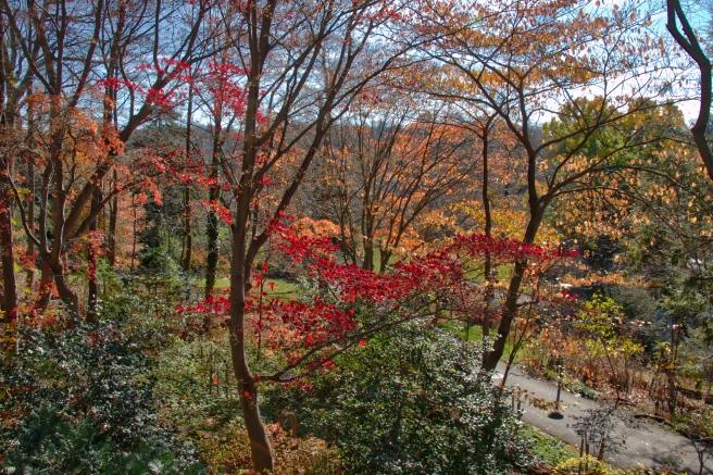 Arboretum 2015-11-21 12.25.06_HDR.jpeg