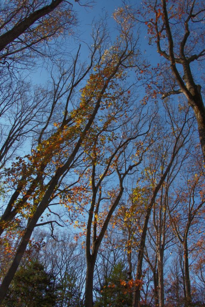Leaf flames 2015-11-15 15.22.45
