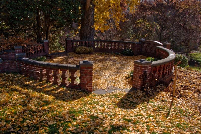 Morris Gingko Biloba leaf carpet 2015-11-21 12.47.13_HDR.jpeg