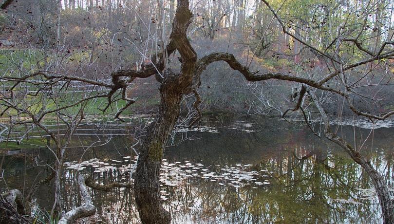 Pond 2015-11-15 15.41.16