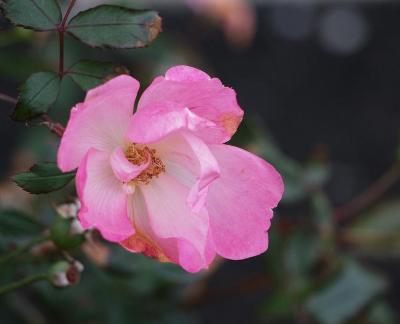 Flower redux 2015-11-28 11.52.46.jpg