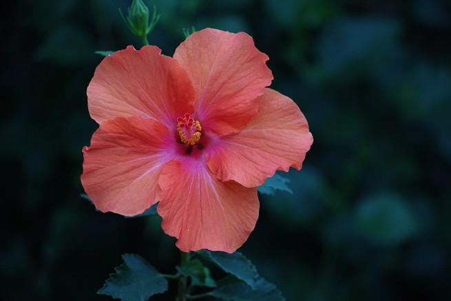 Orange-pink 2015-12-06 16.59.58.jpg