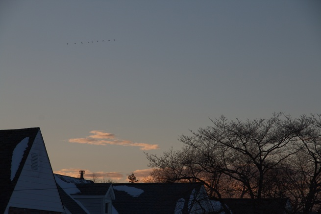 Birds at sunset 2016-01-24 17.54.33.jpg