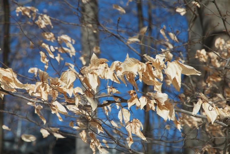 Golden wreath against the blue sky 2016-01-30 12.43.58.jpg