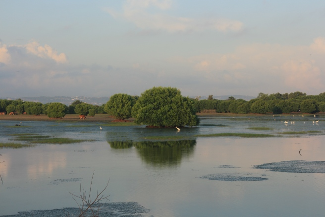 Serangan bird sanctuary 2015-06-01 AFF.jpg