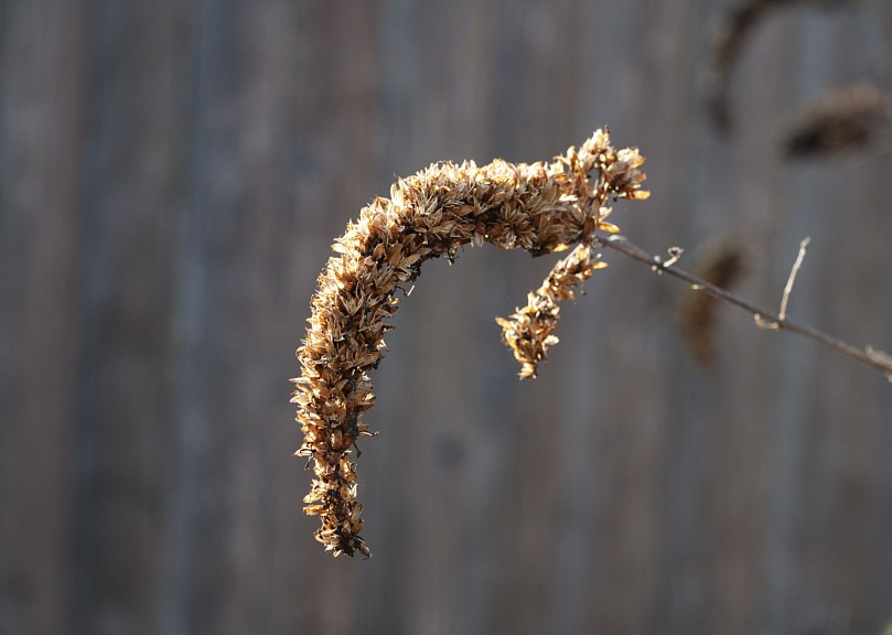 Graceful texture Pennypack trail AFF 2016-02-27 16.47.17.jpg