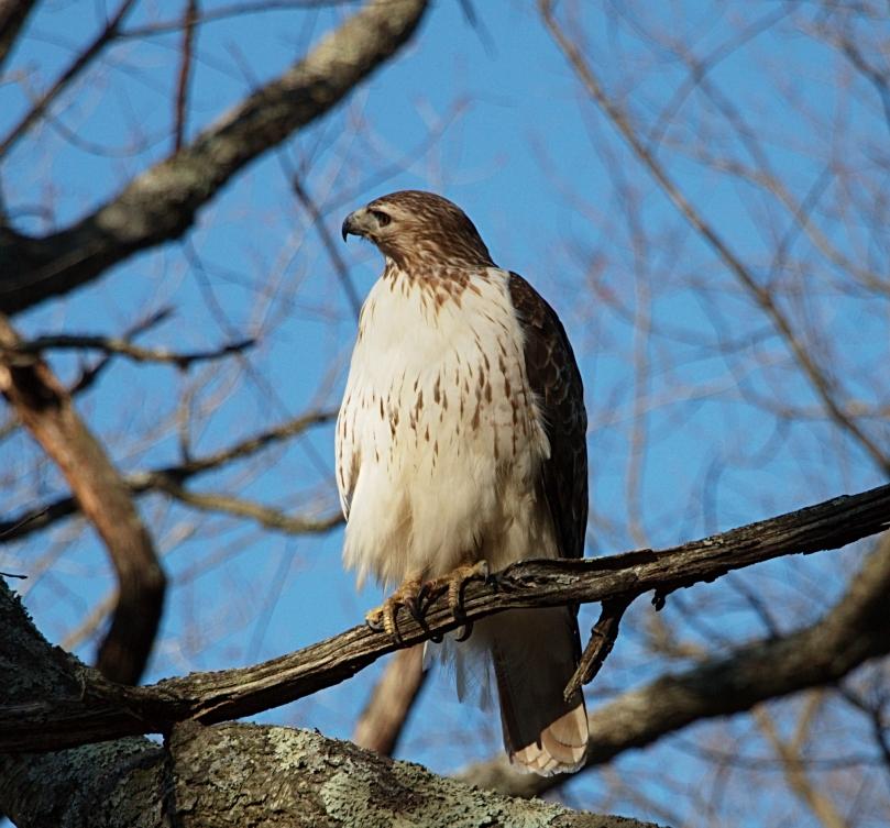 Hawk 3 AFF 2016-02-28 17.03.02.jpg