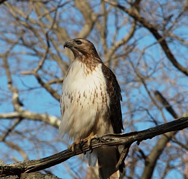 Hawk 4 AFF 2016-02-28 17.01.04.jpg