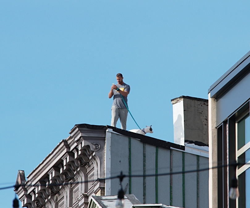 Man and dog on roof 2016-02-07 14.42.17.jpg