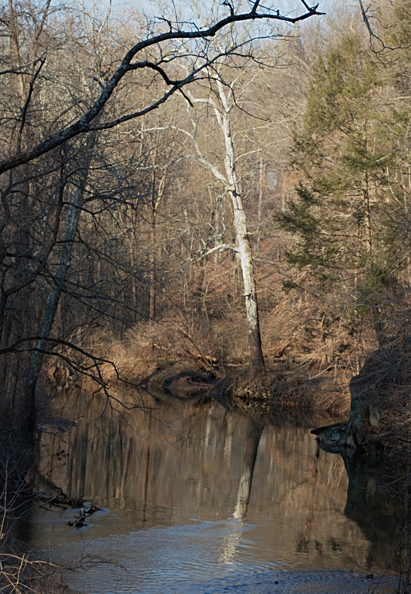 Tree and refleaction Pennypack trail AFF 2016-02-27 16.59.33.jpg