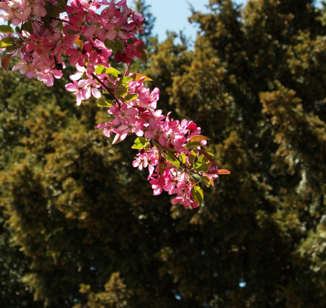 Pink and green 2016-04-17 14.04.07.jpg