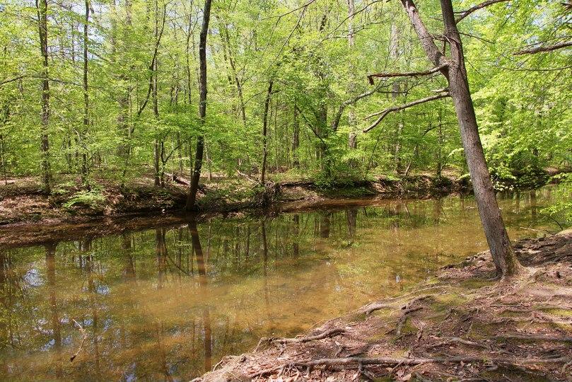 Creek 1 2016-05-12 14.34.16