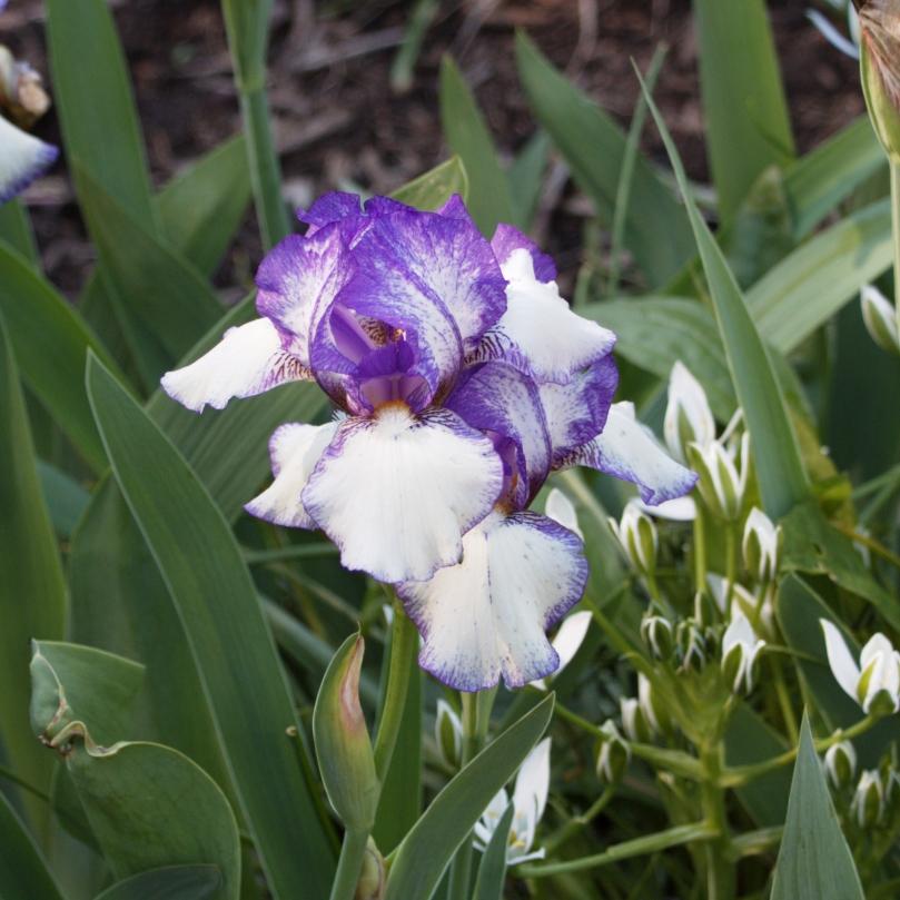 Iris 2016-05-08 15.35.14
