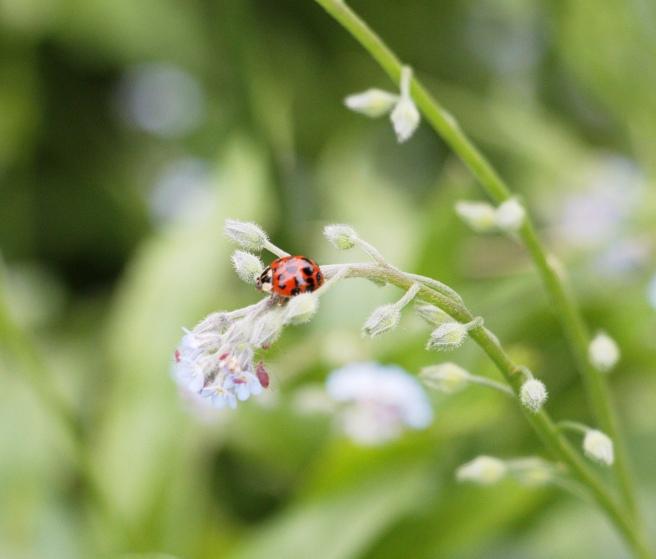 Ladybug 2 2016-05-22 14.03.03