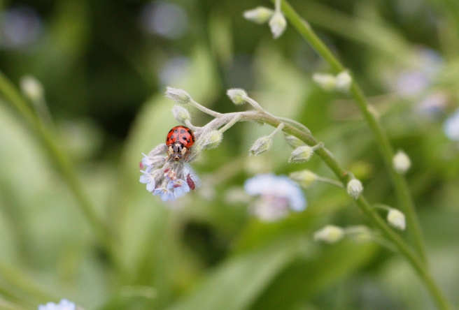 Ladybug 2016-05-22 14.03.25.jpg