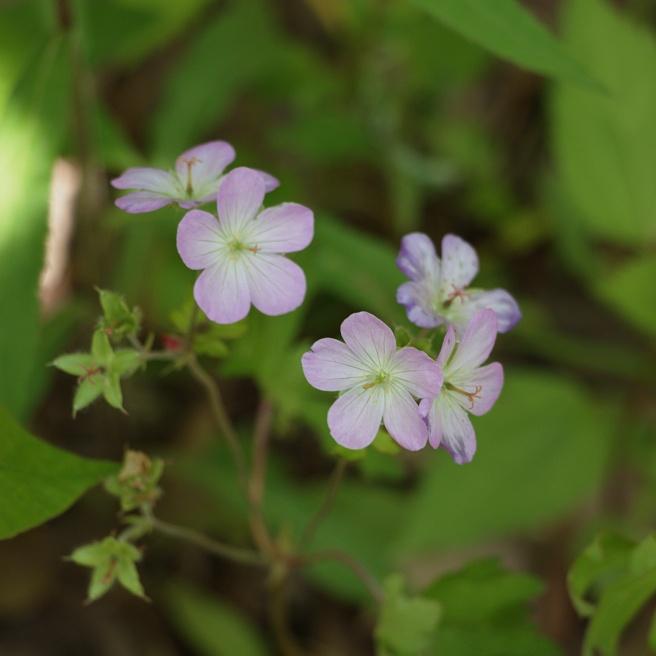 Purple beauties 2 2016-05-12 14.48.41