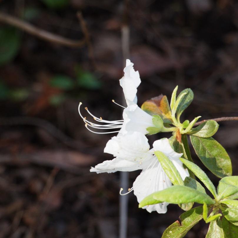 White flower 2016-05-08 15.46.23