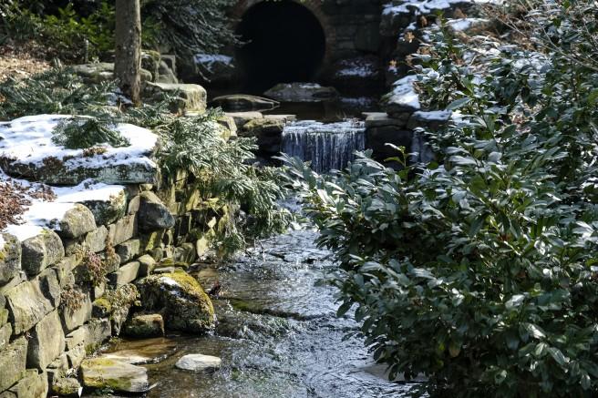 Morris Arboretum, 2019-02-03